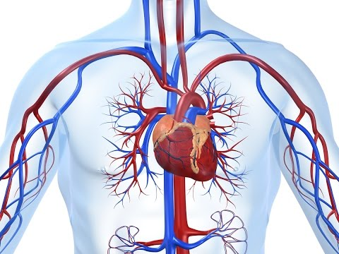 Halbautomatische Blutdruckmonitor M1 gamma-s-1