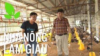 Nhà nông làm giàu | Kỷ luật và sáng tạo, nông hộ lãi trăm triệu ngay lứa gà đầu tiên