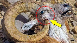 These Amazing Animals Destroy Themselves!