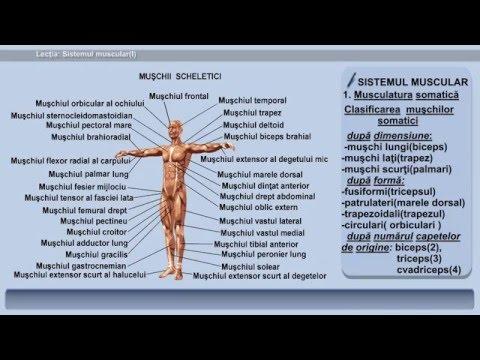 Ce poate fi artroza articulației genunchiului