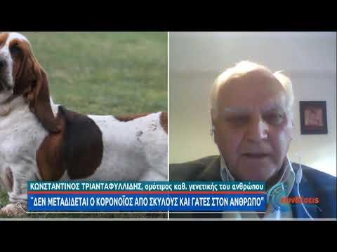 Κ.Τριανταφυλλίδης | Μπορούν τα οικόσιτα ζώα να είναι  φορείς του ιού; | 23/11/20 | ΕΡΤ