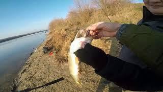 Отчет о рыбалке истринское водохранилище ноябрь 2019
