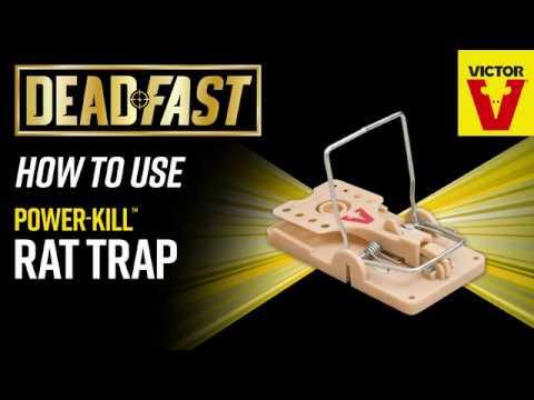 Deadfast Power-Kill Rat Trap in pack Video