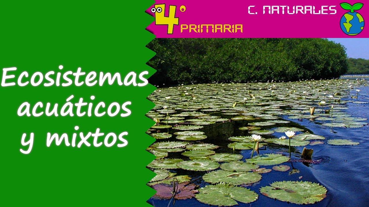 Ciencias de la Naturaleza. 4º Primaria. Tema 5. Ecosistemas naturales acuáticos y mixtos
