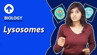 Lysosomes | Cell-Structure & Function | Biology | Class 9