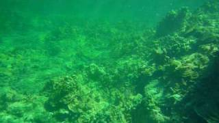 preview picture of video 'Kapoho Tide Pool Snorkel .mov'