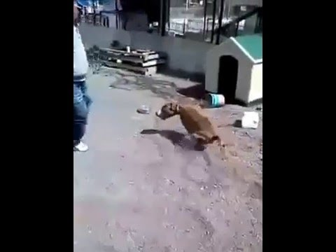 Instant KARMA  - Guy Makes Dog Go Crazy