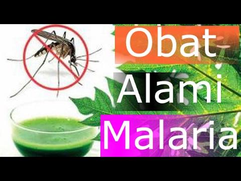 Video Obat Penyakit Malaria Alami Untuk Anak - Anak Dan Penyebab Malaria