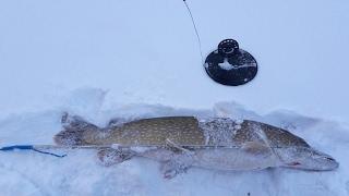 Иткольское озеро вологодская область рыбалка