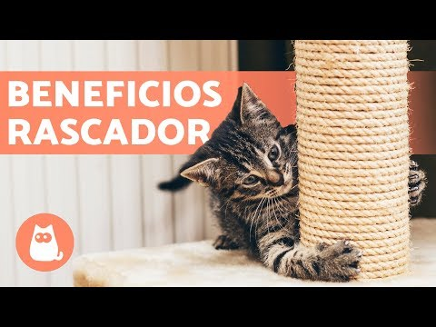 Árbol rascador para gatos – Beneficios y dónde colocarlo