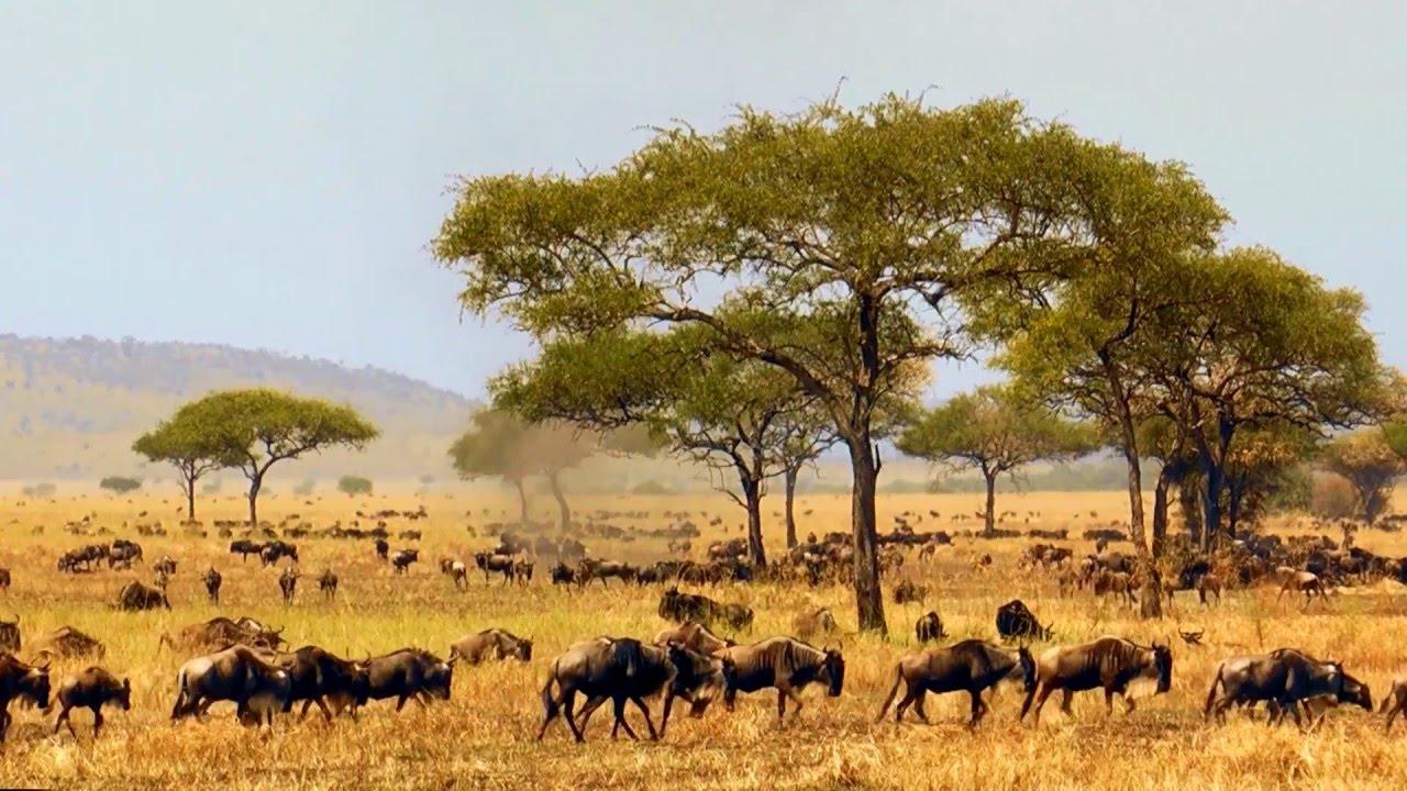 Tansania: Natur (1:02)
