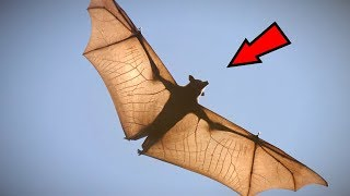 5 Abnormally Large Animals That Really Exist!
