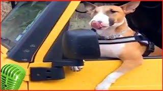 приколы собаки #7 милые щенок и пес