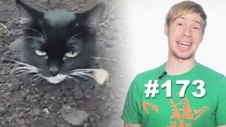 This is Хорошо - Мой хозяин идиот! =о) [My owner is an idiot!]