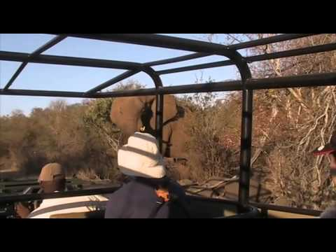 A game drive in the Greater Kruger National Park