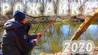 Рыбалка динамо мытищи 2020