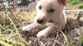 SBS [TV 동물농장] - 18년 9월 23일(일) 884회 예고 /