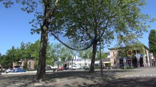 Kunst en bomen