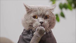 New Aaron's Animal's Video Compilation!