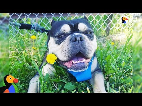 Mother Dog Found Tied Up In Park Finally Has A Real Home | The Dodo + Clear The Shelters