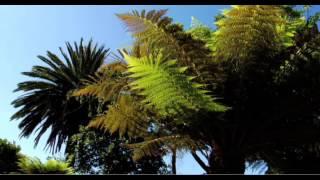 Botanischer Garten von Madeira