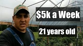 Growing Tomatoes For Profit!!