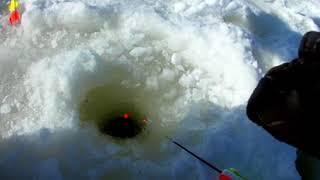 Пруд рыжово рыбалка отчет