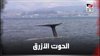 مازيكا مزاعم الحوت الأزرق في مرسى مطروح «القصة الكاملة» تحميل MP3