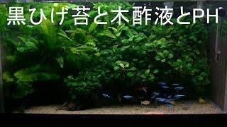 黒ひげ苔と木酢液とPH