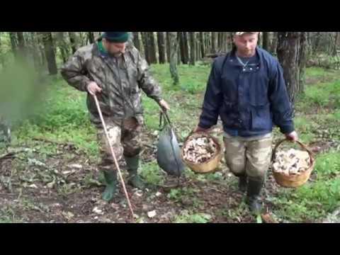 Trattamento di un fungo di unghie San Pietroburgo