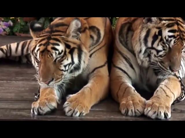 أكثر الحيوانات الآسيوية فتكاً