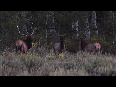 2019 Archer's Choice – Show 5 – Bowhunting Utah Elk with KRO Kearl Ranch Outfitters