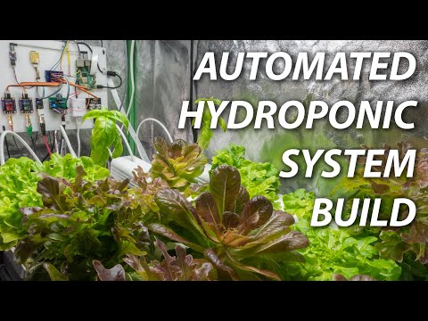 Build an Automated Hydroponic System