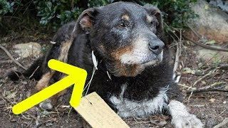 She Had No Clue Her Dog Was A Hero… Until She Found A Note On His Collar