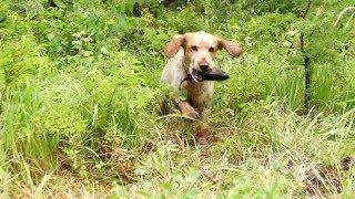 собака бегает за палкой, играет и копает