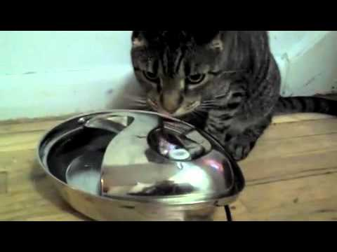 Stainless Steel Drinking Fountain Raindrop Design By Pioneer Pet On Sale Entirelypets