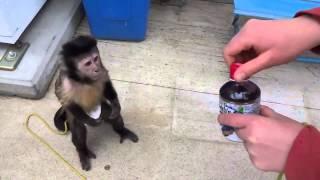 Обезьянка удивила способностями(Monkey surprised abilities)