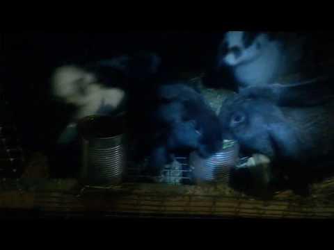 Вечерний обзор,крольчата выходят в свет.