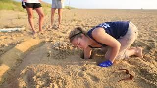 Sea Turtles Hatching