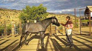 The 26  Tasks of Mustang Taming