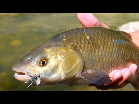 Inverno pescando sverdl regionale