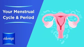 Your Menstrual Cycle &  Periods in 3 Minutes