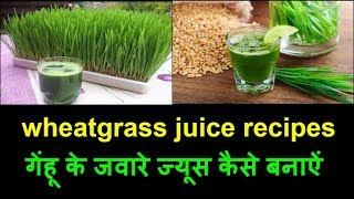 Wheatgrass Juice For Diabetes Free Video Search Site Findclip