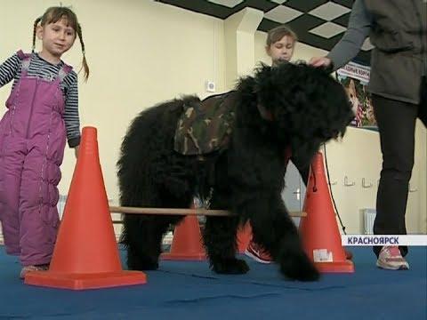 В Красноярске набирает популярность канистерапия - лечение с помощью собак