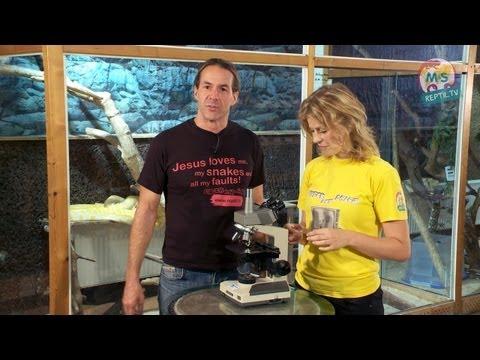 Die Informationen über die Würmer der Parasiten