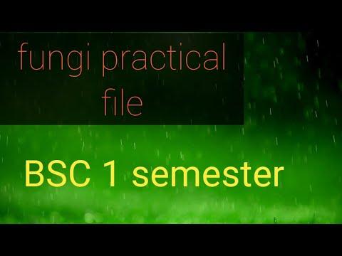 Bsc1 year Botany fungi practical file #100℅ smart work