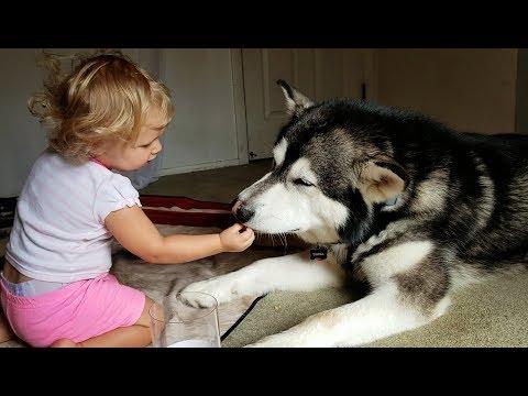 Baby Feeds Dog Treats He Doesn't Like!