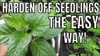 How to Acclimate (Harden Off) Your Seedlings to the Outdoors the EASY Way | LucasGrowsBest