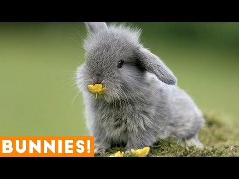 , title : 'Funniest Rabbit Videos Weekly Compilation 2018 | Funny Pet Videos'