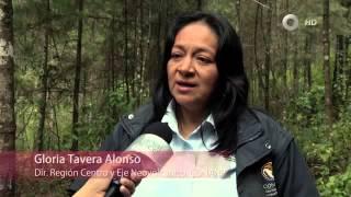 Especiales Noticias - Mariposa Monarca. Un reto a la conservación